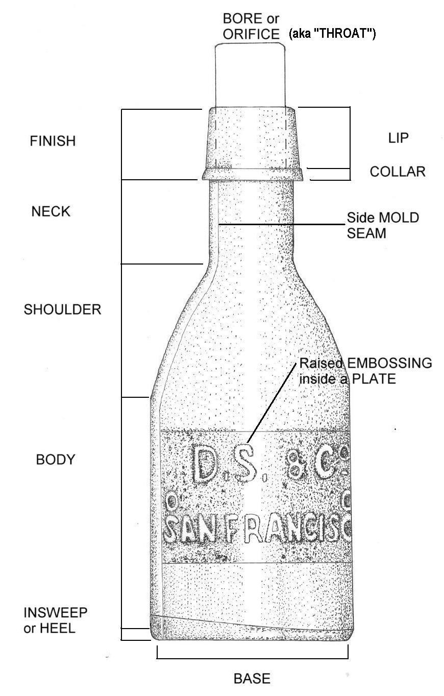 Line Quality Art Definition : Bottle morphology